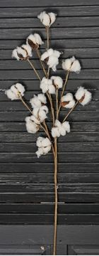 "Picture of Cotton Boll / Ball - White Bush / Branch 31"" H"
