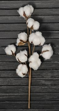 "Picture of Cotton Boll / Ball - White Bush / Branch 14"" H"