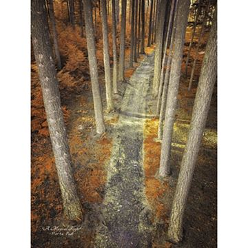 Picture of A Magical Flight By Martin Podt Art Print - 12 X 16