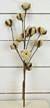 "Picture of Cotton Boll / Ball - Tea Stained Bush / Branch 24"" H"