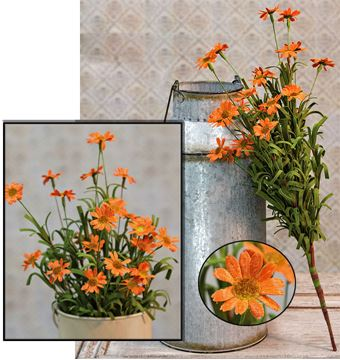"Picture of Mini Mountain Daisy Bush In Orange Bush / Branch 18"" High"