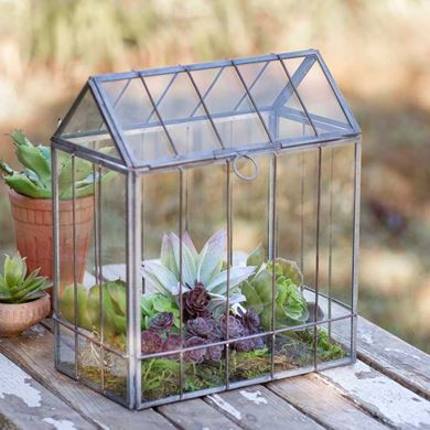 Picture for category Terrariums